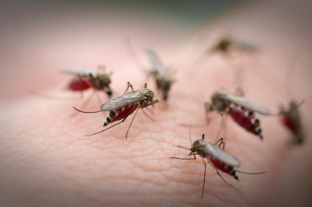 Evolving mosquito bite virus hits Canada by Ahmed Fattouh in Edmonton AB